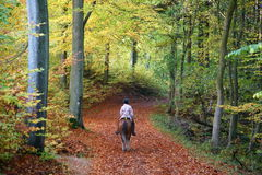 Rider on horse. In a forest in autumn in Denmark Stock Photo