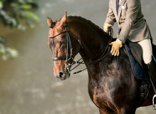 Rider on a horse. Against the wall of house Royalty Free Stock Image