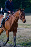 Rider on horse in countryside. Rider on brown horse at equestrian event in countryside Stock Photography
