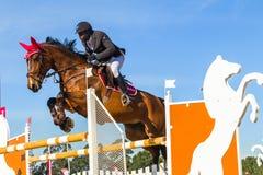 Rider Horse Jumping Arkivbilder