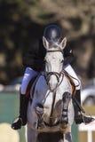 Rider Horse Jumping Action Arkivfoto