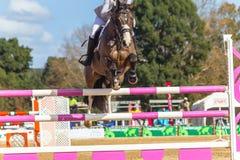 Rider Horse Jumping Closeup Immagine Stock Libera da Diritti