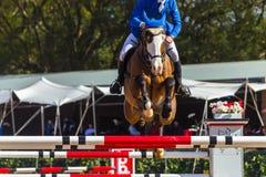 Rider Horse Jumping Closeup Fotografia Stock Libera da Diritti