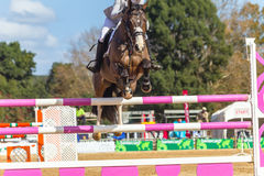Rider Horse Jumping Closeup. Rider abstract unidentified horse jumping gate poles closeup equestrian show action Royalty Free Stock Image