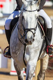 Rider Horse Jumping Closeup Stock Images