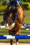 Rider Horse Jumping Closeup Rear Hoofs Fotografia Stock Libera da Diritti