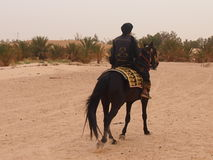 The rider on a horse Royalty Free Stock Photography