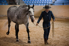 Rider and horse of pure Spanish race walking on the track beginning equestrian exercise Royalty Free Stock Images