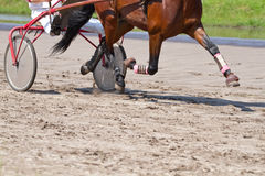Rider on a horse race Royalty Free Stock Photos