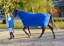 Rider and horse racing circuit competition. Horse after racing circuit competition.Hors after shower stock photo
