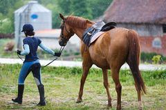 Rider with the horse. In the rain at summer time Stock Image