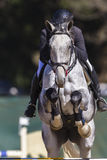 Rider Horse Show Jumping Action. Closeup abstract detail Stock Photography
