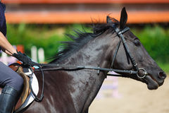 Rider on a horse Stock Photos