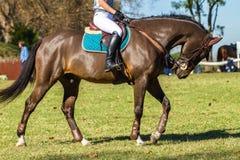 Rider Horse Unidentified Image stock