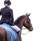 Rider on horse on white.  stock image
