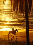 Rider on horseback at beach. Rider on horseback at sunset on beach in Nadi, Fiji in the South Pacific Stock Photography