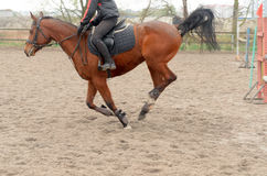 A rider on horseback overcomes obstacles. Royalty Free Stock Photos