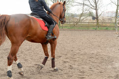 A rider on horseback overcomes obstacles. Stock Photo