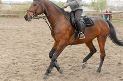 A rider on horseback overcomes obstacles. Royalty Free Stock Photo
