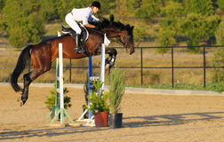 Rider in the jumping show stock image