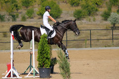 Rider in the jumping show Royalty Free Stock Image