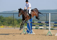 Rider in the jumping show. Rider on bay horse in the jumping show Stock Photography