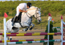 Rider in jumping show Stock Image