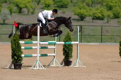 Rider in the jumping show Stock Images