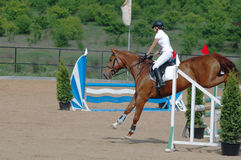 Rider in the jumping show. Rider on red horse in the jumping show Royalty Free Stock Photos