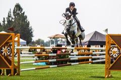 Rider Jumps Horse At Horse show Royaltyfri Foto
