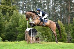 Eventing horse jumping log Royalty Free Stock Photos