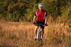 Rider on Mountain Bicycle it the forest Royalty Free Stock Images