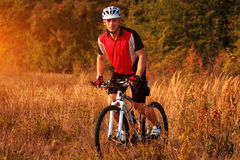 Rider on Mountain Bicycle it the forest Royalty Free Stock Photo