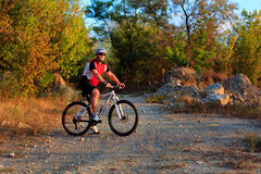 Rider on Mountain Bicycle it the forest Stock Image