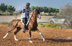 Rider participating in an endurance race. Dubai, UAE - Dec 19, 2014: Rider and his horse participating in a desert endurance race Royalty Free Stock Photos