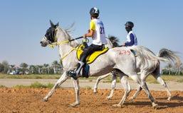 Rider participating in an endurance race. Dubai, UAE - Dec 19, 2014: Rider and his horse participating in a desert endurance race Stock Photos
