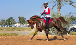 Rider participating in an endurance race. Dubai, UAE - Dec 19, 2014: Rider and his horse participating in a desert endurance race royalty free stock images