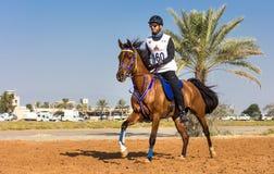Rider participating in an endurance race. Dubai, UAE - Dec 19, 2014: Rider and his horse participating in a desert endurance race stock photo