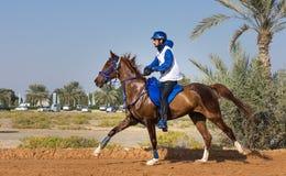 Rider participating in an endurance race. Dubai, UAE - Dec 19, 2014: Rider and his horse participating in a desert endurance race royalty free stock photography