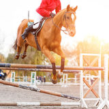 Rider performing jump on sorrel horse over hurdle. Young rider performing jump on sorrel horse over a hurdle on show jumping. Equestrian sport background with Stock Image
