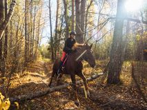 The rider on the red horse jumps over an obstacle in the autumn forest royalty free stock images