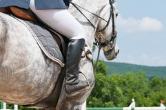 Rider in the saddle Stock Image
