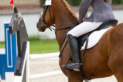 Rider in showjumping Stock Photos