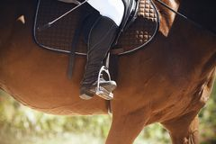 The rider sits astride a brown horse, putting his leg in a black boot in the stirrup stock photos