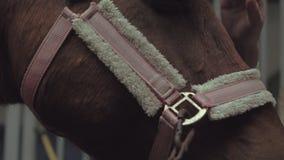 Rider Steeds un cavallo nella stalla stock footage