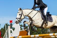 Rider Unidentified Horse Jumping Arkivbild