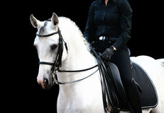 Rider on white arab. On black Royalty Free Stock Image