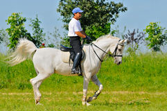 Rider on white arabian horse Royalty Free Stock Image