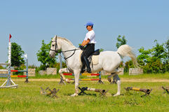 Rider on white arabian horse Royalty Free Stock Photo