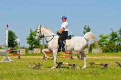 Rider on white arabian horse Royalty Free Stock Photo